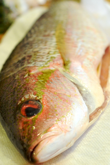 Salt Encrusted Yellowtail Snapper from Mike's Table